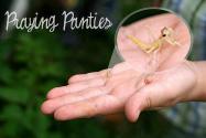 Praying Panties & Sparkles the Alligator