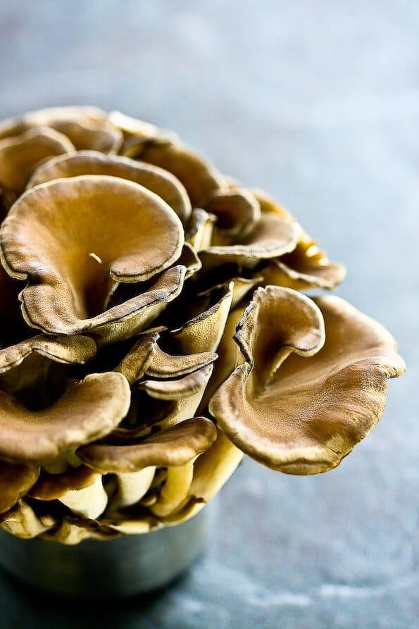 japanese-maitake-mushroom