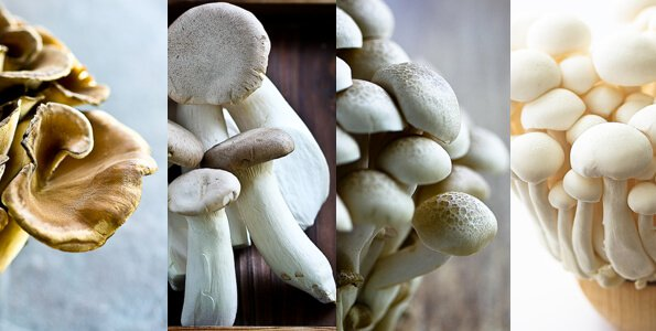 japanese-mushroom-medley