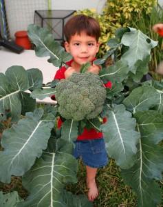 nathan-broccoli