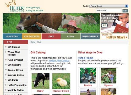 quaker-heifer