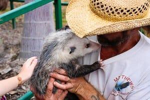 jaden-opossum-024