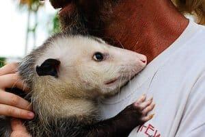 jaden-opossum-027
