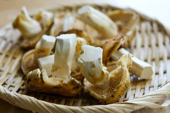 matsutake-dobin-mushi-mushroom-recipe-003