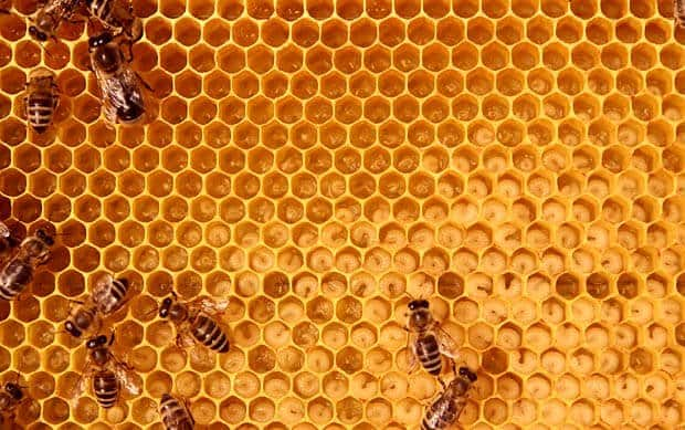 inside the bee-hive