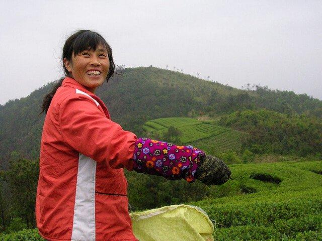The Art of Tea Tasting