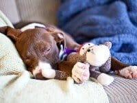 coco-sleeping-8907.jpg