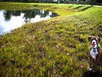 lawn-9829.jpg