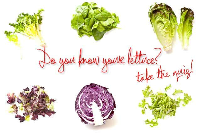 Lettuce-Feature-Image