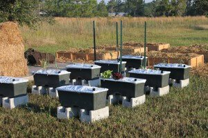 earthbox-garden-how-to-3987.jpg