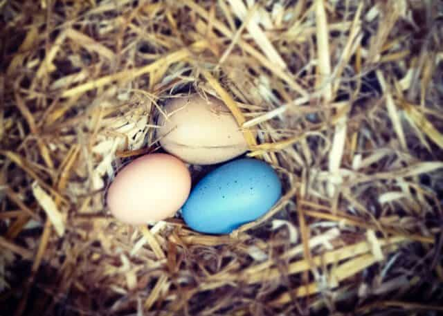 eggs-0726-2