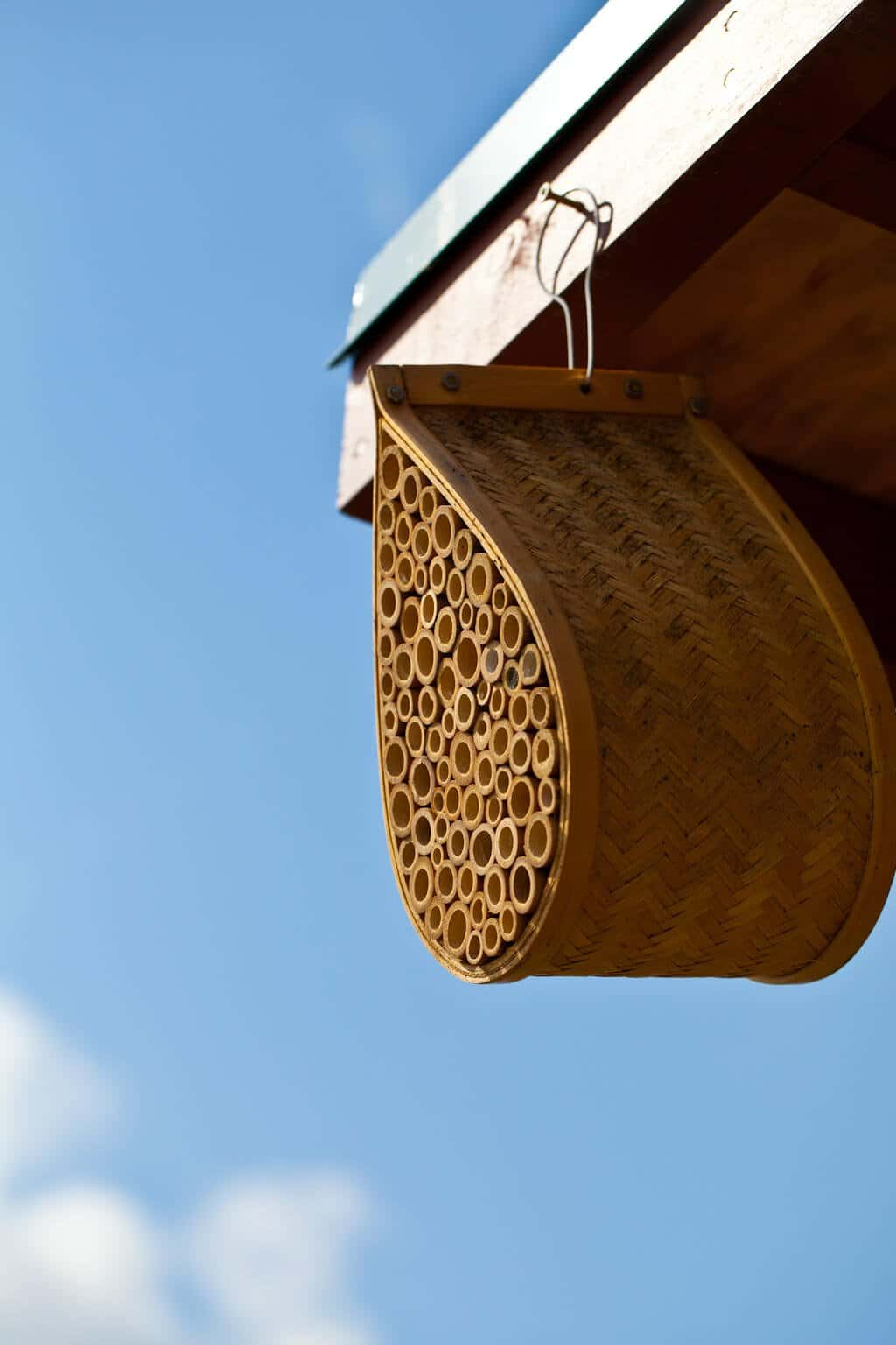 Mason Bee House Steamy Kitchen Recipes