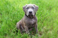 buster-blue-feature-3076.jpg