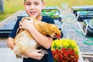 chickens-growing-up-9751.jpg