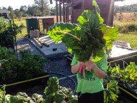 garden-update2-3834.jpg