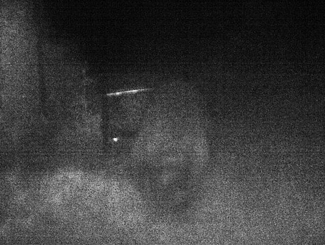 damn-raccoon-0016-3