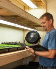 growing microgreens-1037