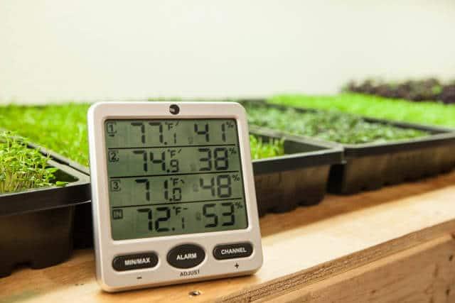 growing microgreens-1050