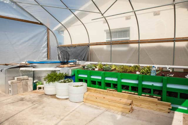 growing microgreens-1053
