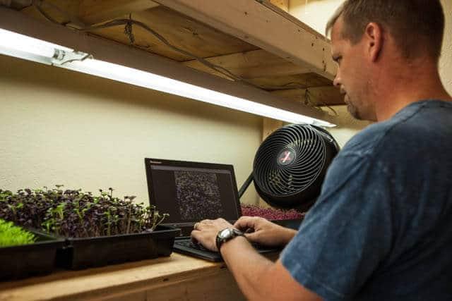 growing microgreens-1055