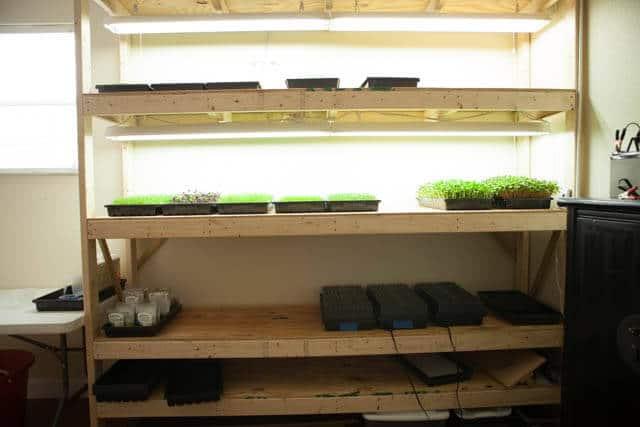 how-to-grow microgreens-0689