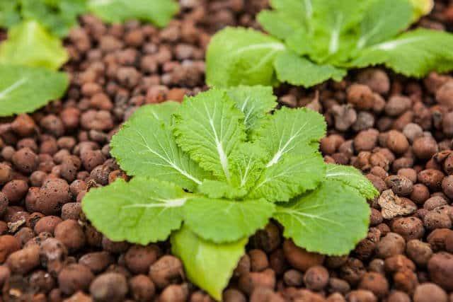 how-to-grow microgreens-0705