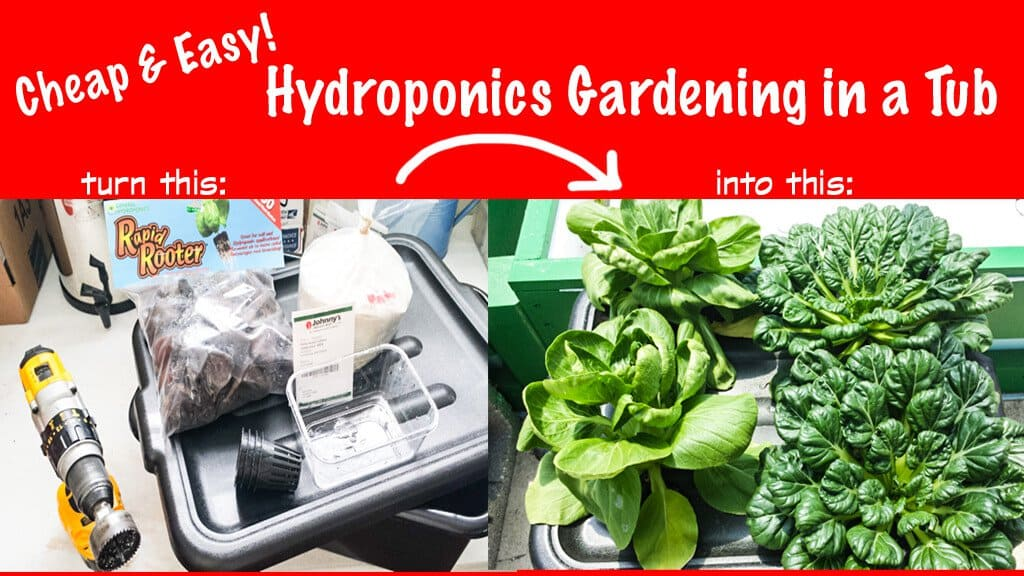 Grow Foolproof Hydroponic Gardening in a Tub Steamy Kitchen Recipes