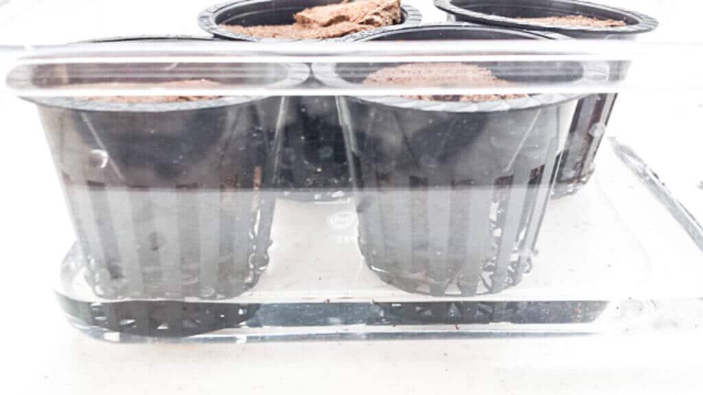 tub-hydroponics-11-18