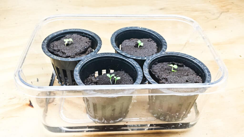 tub-hydroponics-12-21