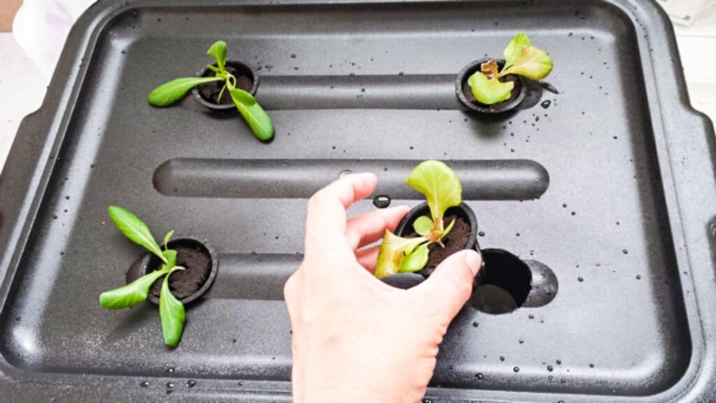 tub-hydroponics-38