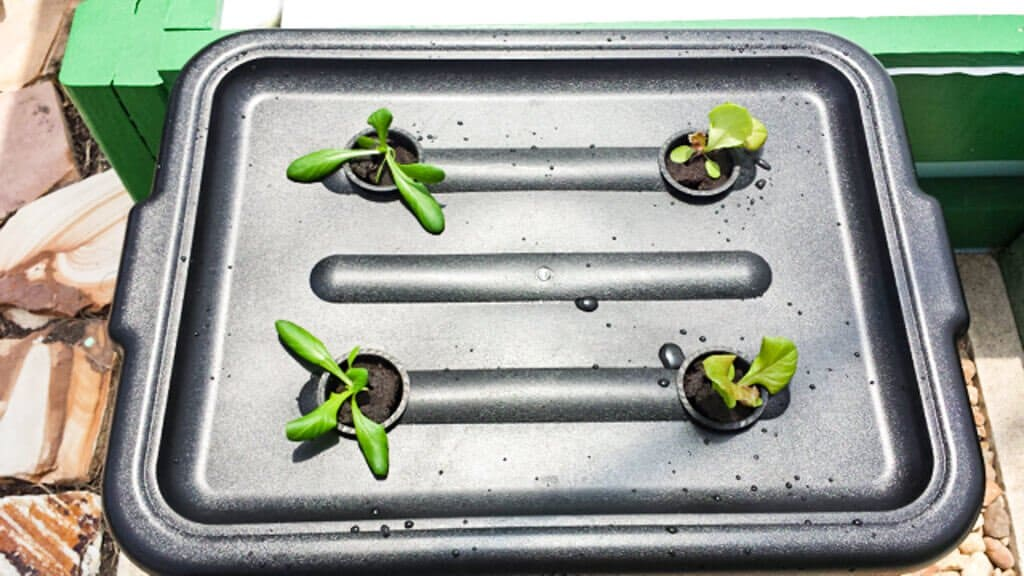tub-hydroponics-39-wk1
