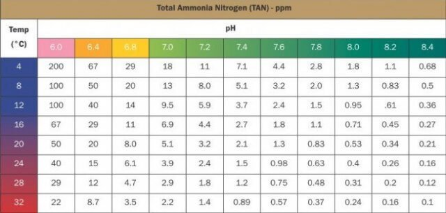 ammonia toxicity