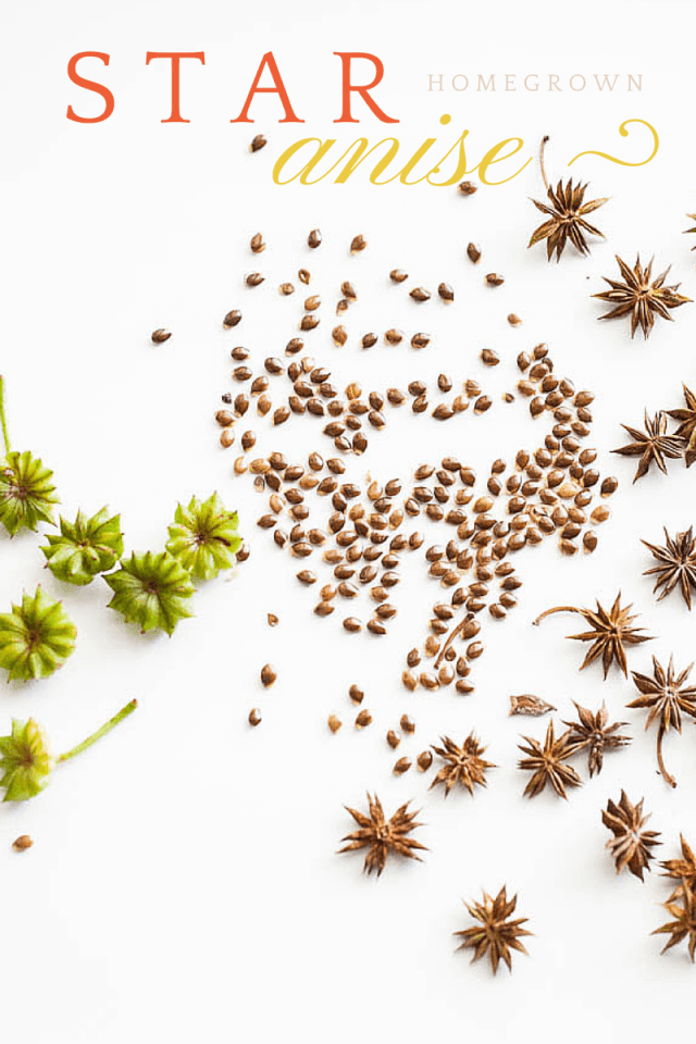 homegrown-star-anise-2