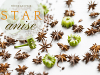 homegrown-star-anise