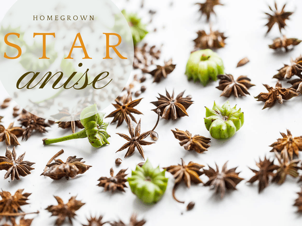Home Grown Star Anise