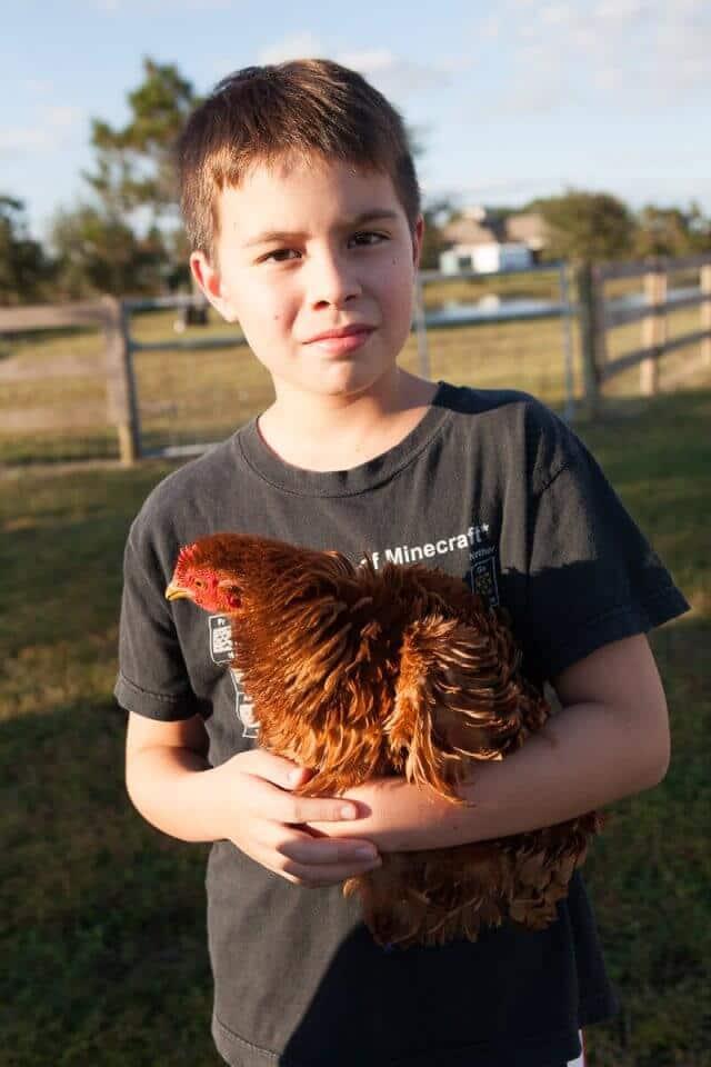 hens-eggs-2884