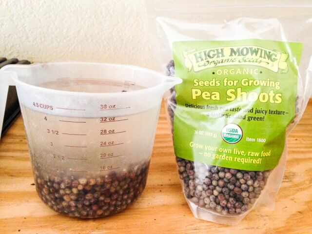 how to grow pea shoots-8203