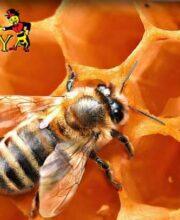 beehive-adoption-3
