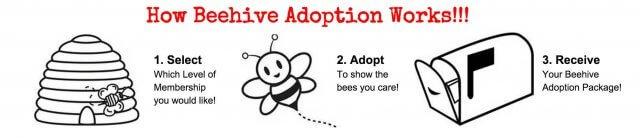 beehive-adoption