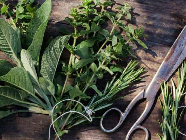 fresh herbs like basil, rosemary, sage, parsley are great to marinate steaks