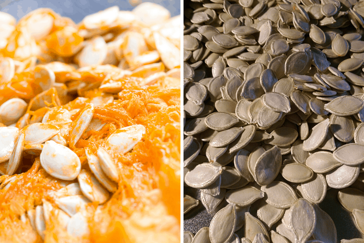 pumpkin seeds with shell on