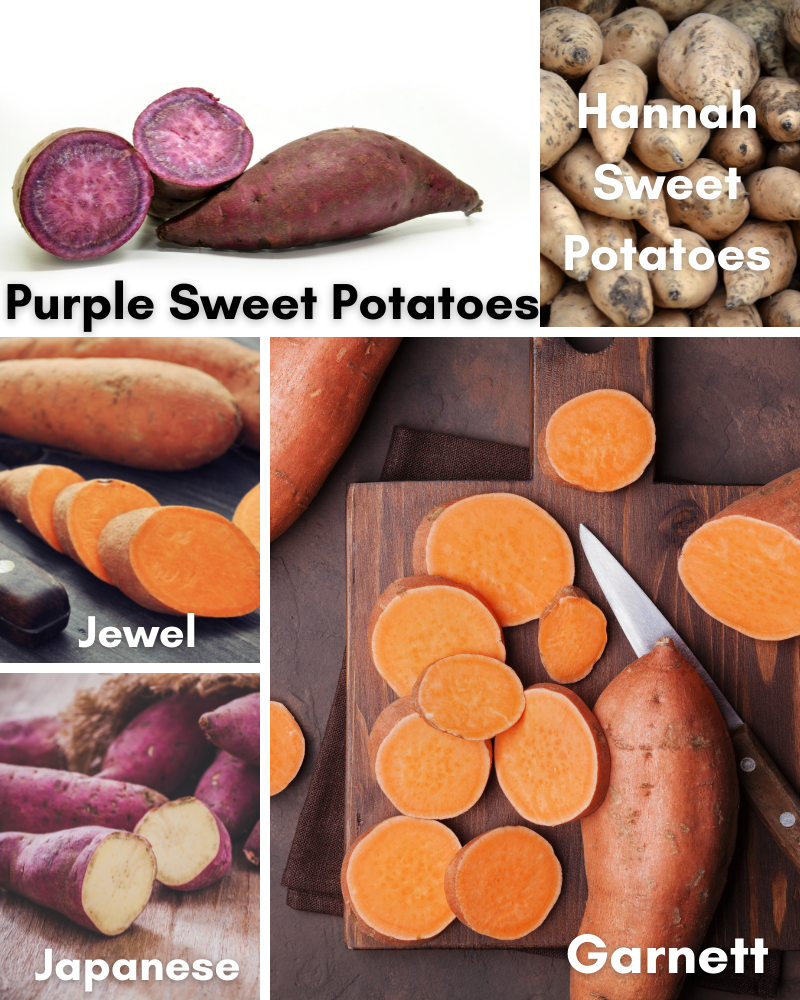 five different types of sweet potatoes.